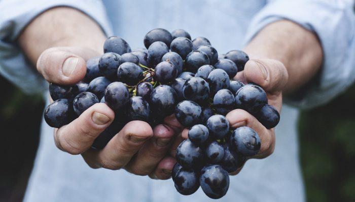 Grapes Are Delicious